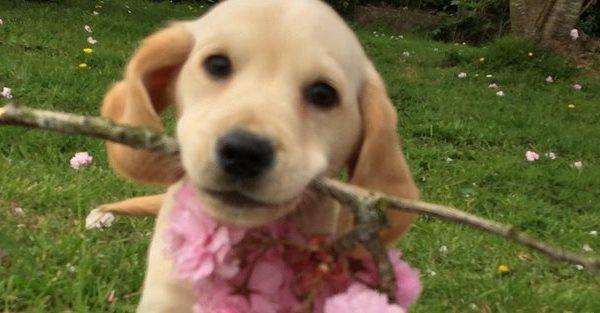 Dog breeder receives suspended sentence after successful